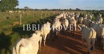 Fazenda De Pecuária, Cacau Clonado E Café