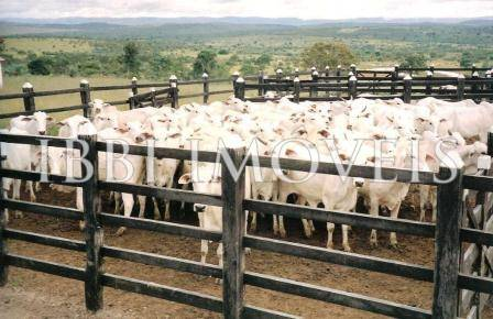 Excellent cattle farm with 663hectares only 280 km from Salvador